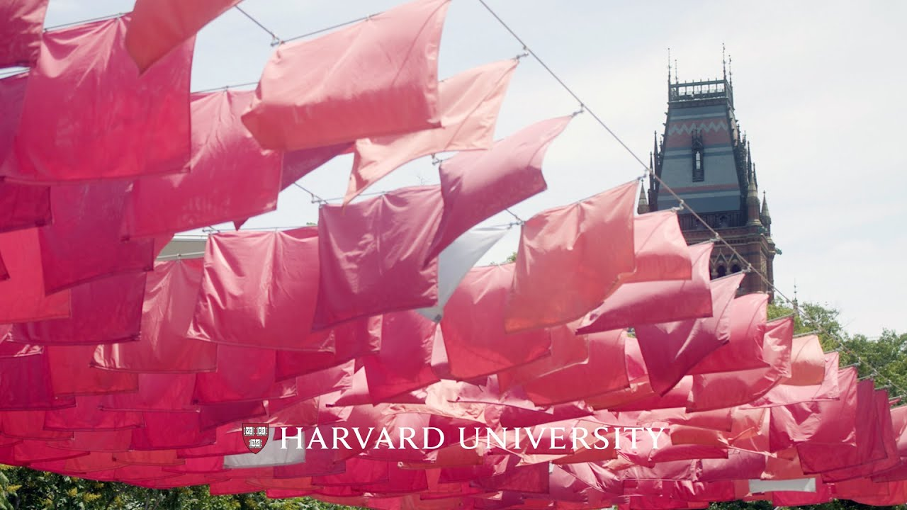 Sights and sounds of a Harvard summer
